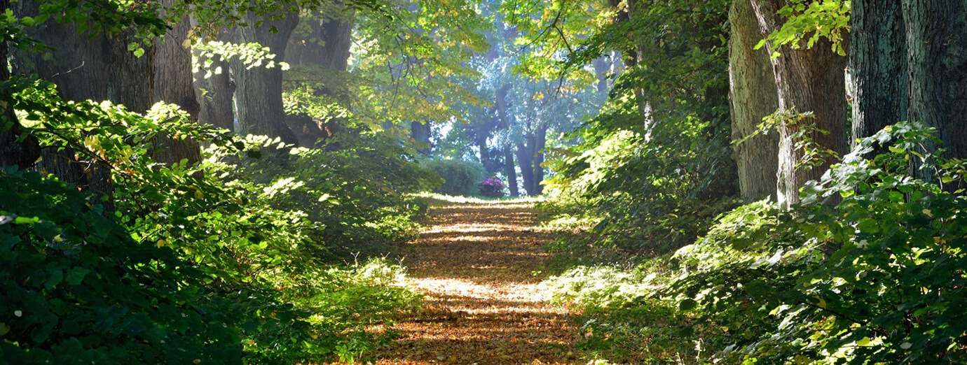 Primavera Jastrzębia Góra czyste powietrze